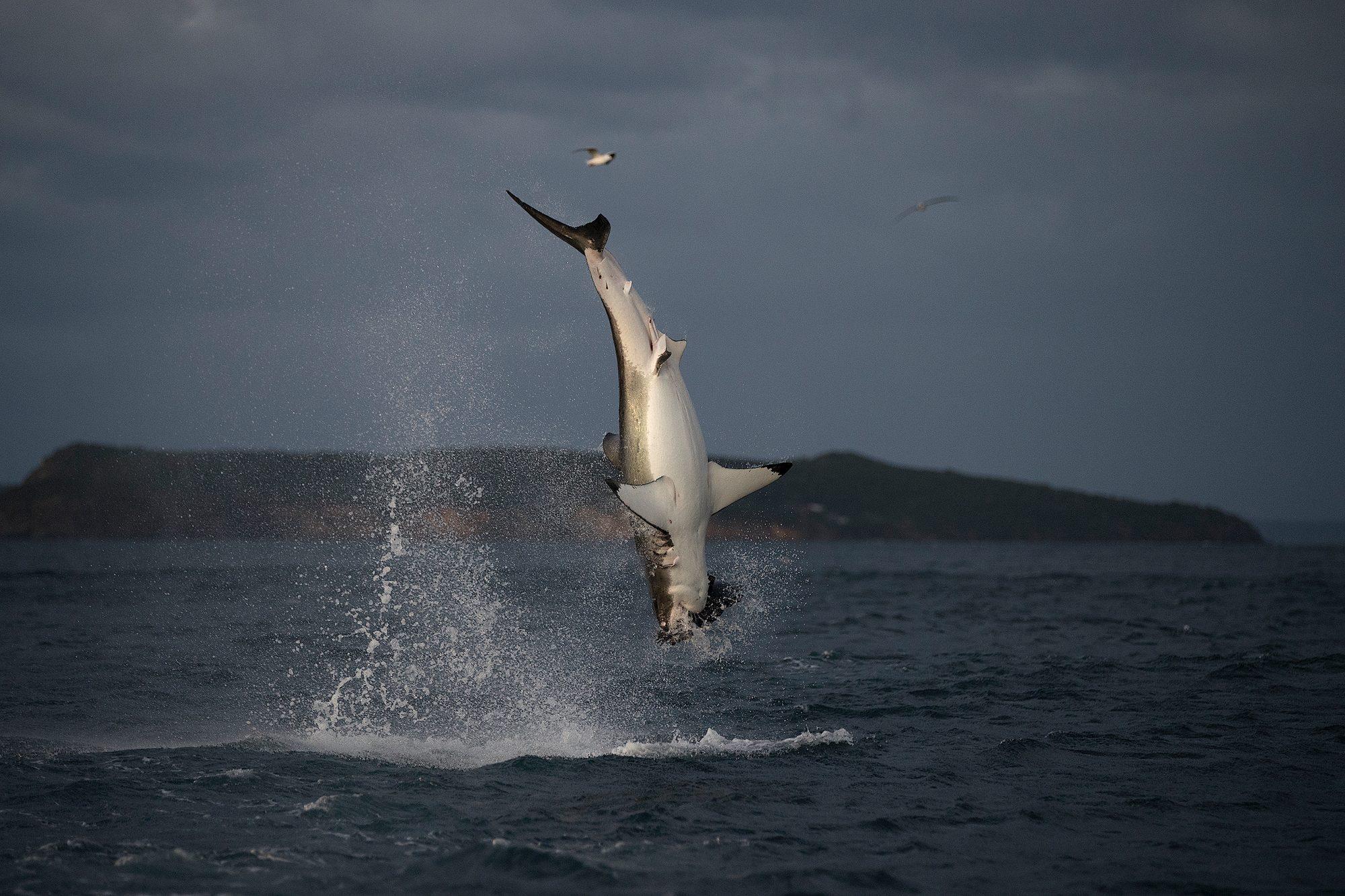 SW18: AIR JAWS RETURNS