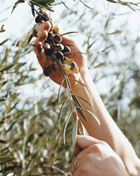 images-sys-fw200511_oliveoil.jpg