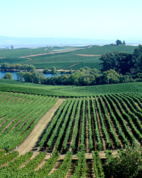Northern California Wine Country Recipes & Value Wines