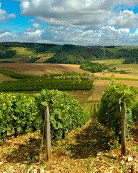 images-sys-200904-a-wine-country-sfrance.jpg