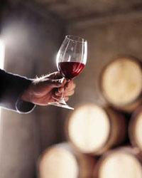 Discovering Pinot Noir in New Zealand