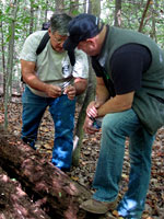 Tom Coliccho Forages for Mushrooms