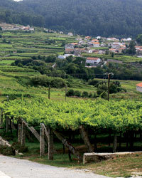 Is Albariño the Next Great Summer Wine?