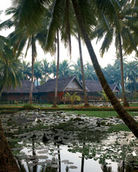 Laos Food: Lao Wetlands