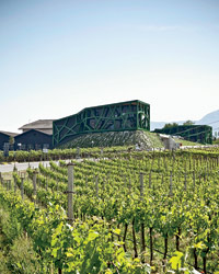 Wine Travel: Cantina Tramin vineyard.