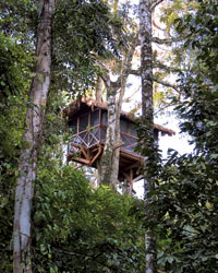 Wild Food Travel: Inkaterra Canopy Tree House