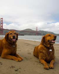 images-sys-200907-a-dogs-san-francisco.jpg