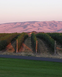 Washington State Wine Region Basics