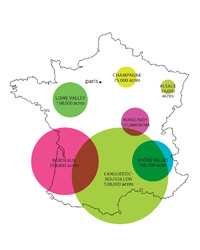 Things You Need to Know About French Wine