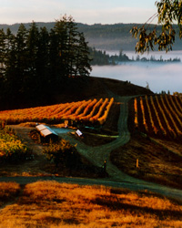 Sonoma County places to visit: Cyrus