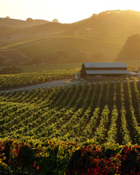 World's Best Wine Regions