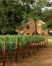 images-sys-201110-a-morlet-family-vineyards.jpg