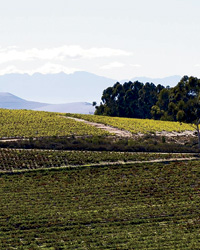 South African Wine: Adi Badenhorst's Swartland Vineyard