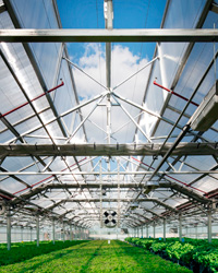 Gotham Greens: Rooftop Greenhouse