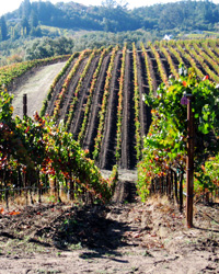 images-sys-201110-a-alysian-vineyards.jpg