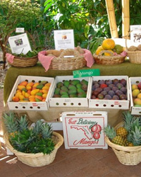 Fruit Picking: Fairchild Farm