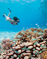 Snorkeling with the Four Seasons Resort at Kuda Huraa