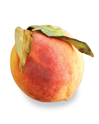 Alice Waters: Yellow Peaches