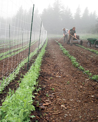 Maine Vacation at Nebo Lodge: Produce from Turner Farm