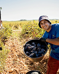 images-sys-201201-a-wine-road-trip-collect-grapes.jpg