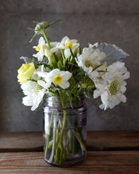 ranunculus and pincushion flowers