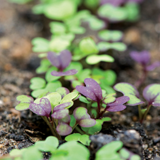 Researchers Successfully Grow Vegetables in Martian Soil