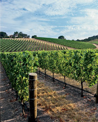 2013 F&W Wine Guide Preview: Talley Vineyard