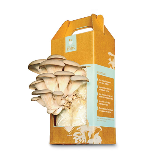 DIY Kit: Mushrooms