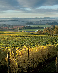 Oregon Wine Region