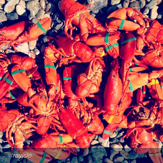 captioned-201308-HD-instagram-ray-isle-lobster.jpg