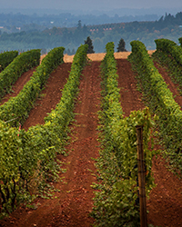 original-201304-a-regional-wine-producers-oregon-erath.jpg