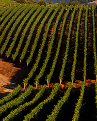 Sonoma Wine Producers We Love