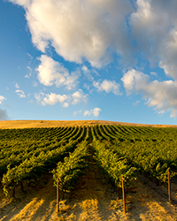 Washington Wine Producers We Love