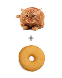 original-201308-a-cat-doughnut.jpg