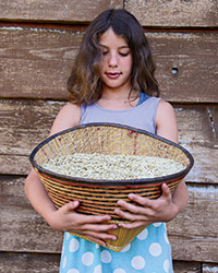 original-201310-a-heirloom-wheat.jpg