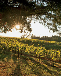 Best California Wineries to Visit