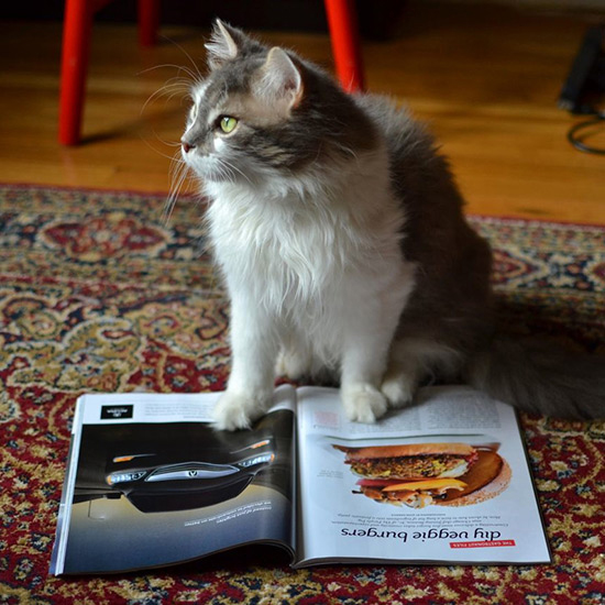 original-201405-HD-cat-reading-food-and-wine.jpg