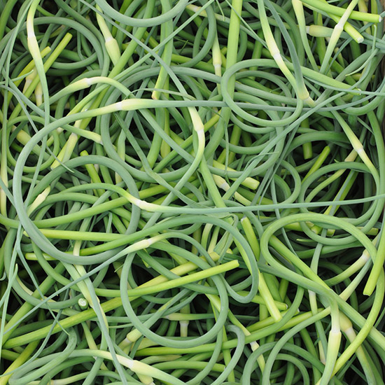 Everything You Need to Know About Garlic Scapes