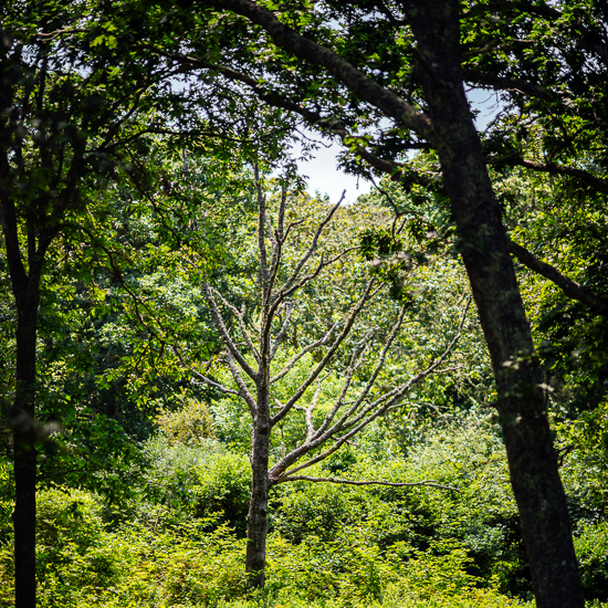 original-201408-HD-photo-tour-marthas-vineyard-26.jpg