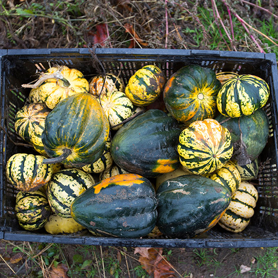 original-201409-HD-caledonia-prison-farm-donates-vegetables.jpg