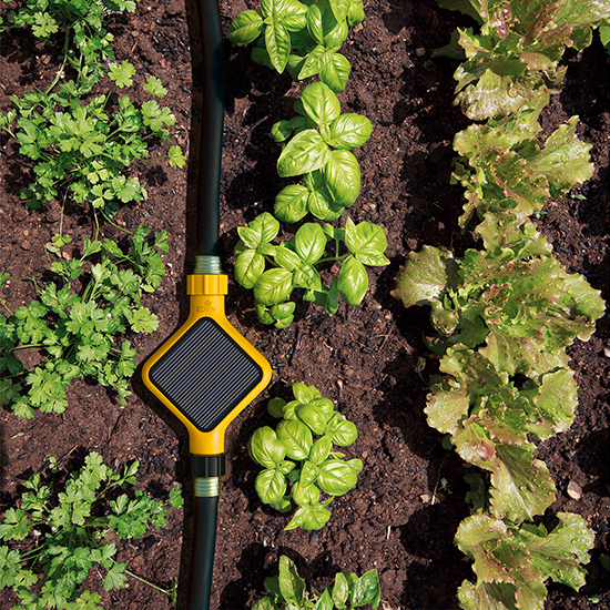 This Virtual Green Thumb Will Keep Your Plants Alive