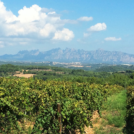 original-201412-HD-cava-vineyards.jpg