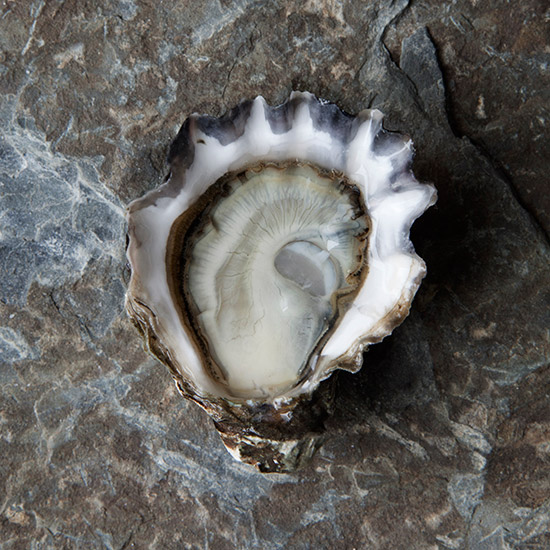 Mail-Order Oysters