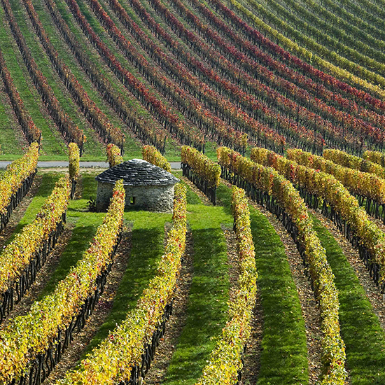 Why You Should Visit Burgundy Now (and 5 Great Wines to Drink if You Can't)