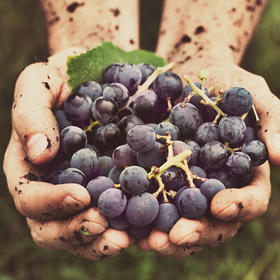 Why More American Winemakers are Hand-Pruning, Hand-Harvesting and Foot-Stomping their Grapes