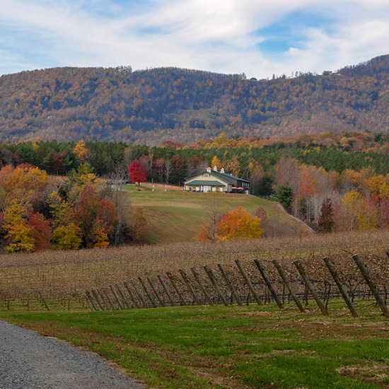 Jones von Drehle Grows Brilliant Grapes on the Slopes of North Carolina's Blue Ridge Mountains