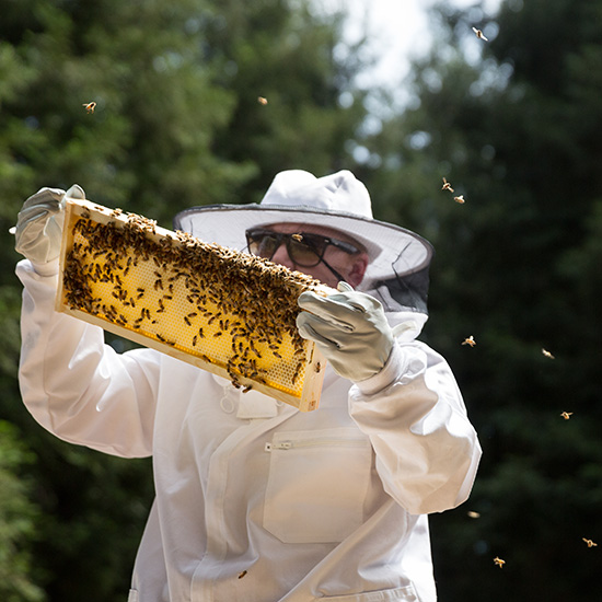 Beekeeping, Harvest Inn