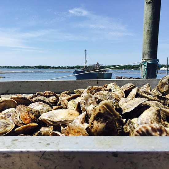 All Your Questions About Oysters, Answered