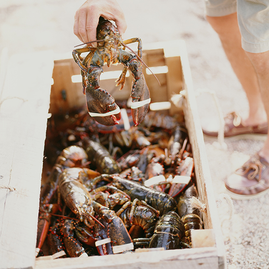 Lobsters Might be Immortal, and Other Things I Learned on a Lobster Boat