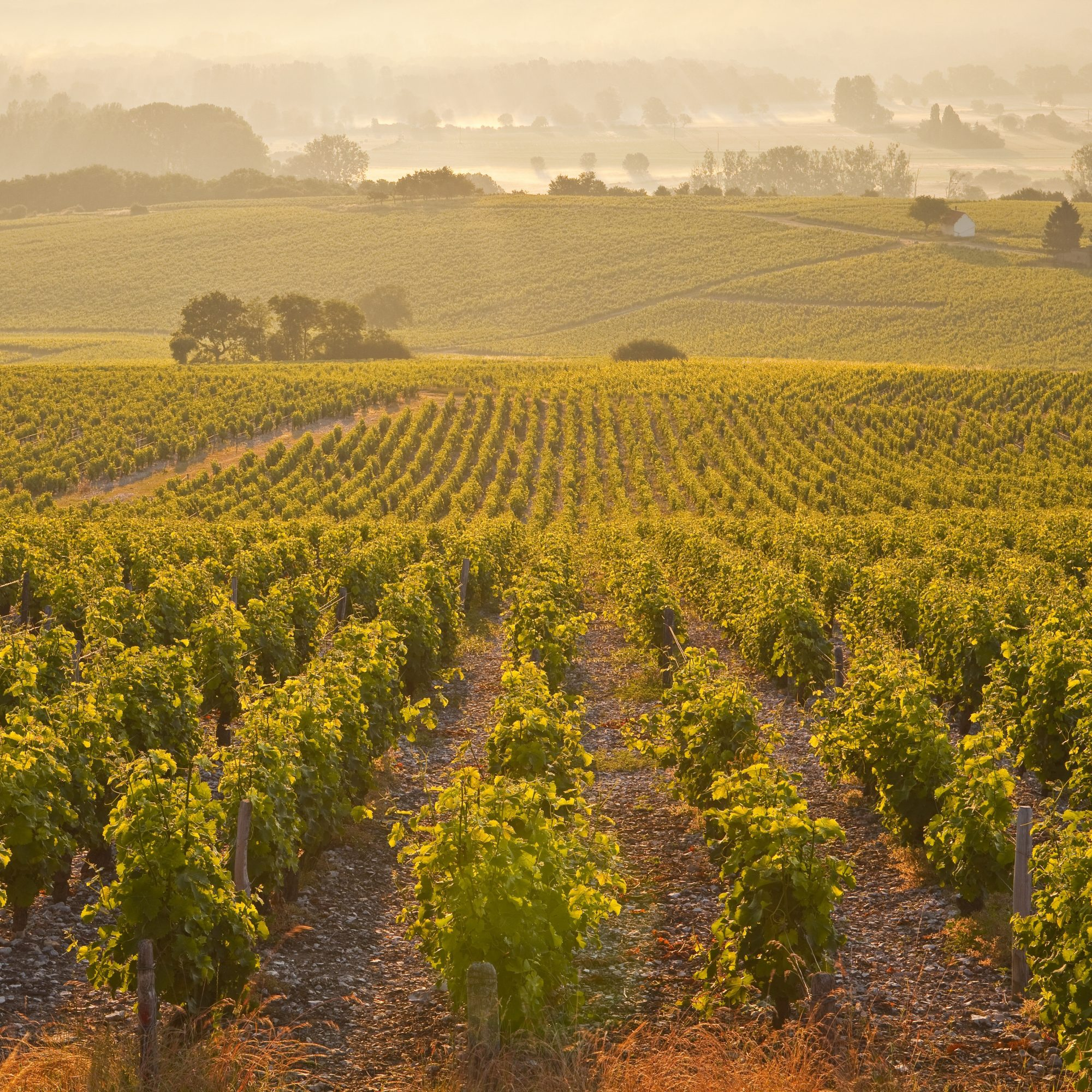 The Best Deals in Wine Country Travel
